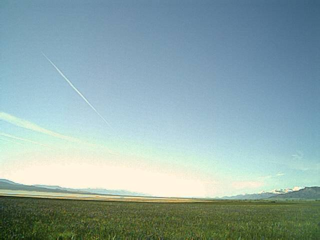 Contrails in the Meadow